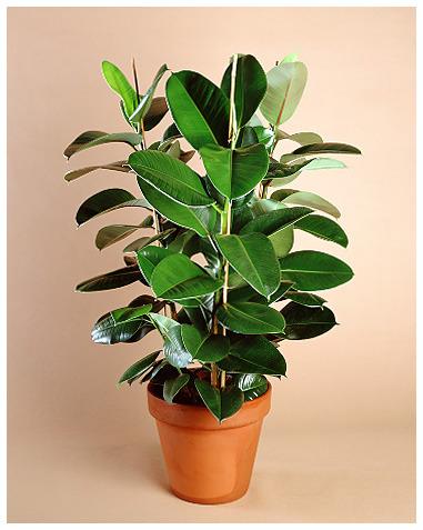Подбираем комнатные растения по