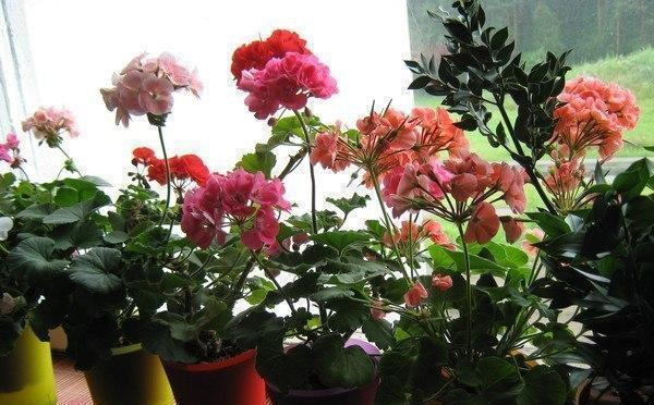 азотно фосфорное удобрение для комнатных растений