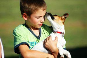 Главные ошибки владельцев домашних животных. 9433.jpeg